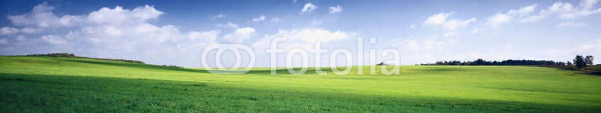 3256956 – Russian Federation – russia summer landscape – green fileds, the blue sky and white c