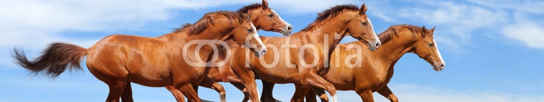 Панели для кухни Галоп лошадей