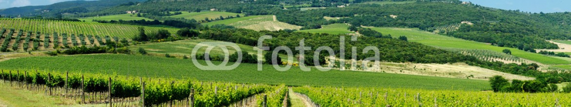 54196611 – Lithuania – Panorama of wine fields in Italy