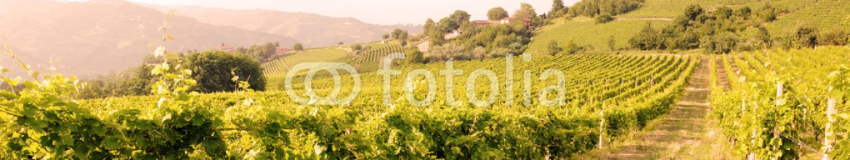 54573378 – Italy – vineyards