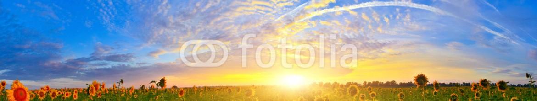 67346351 – Ukraine – Sunflower field