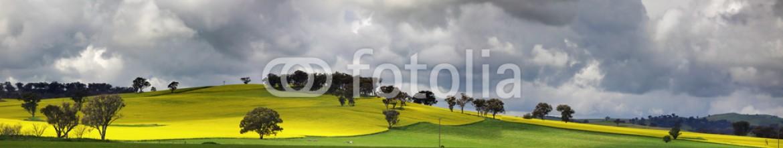 70798570 – Australia – Sunnyside Cowra Landscape Canola Views