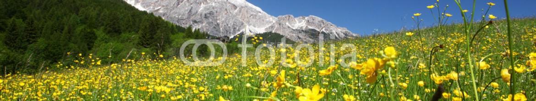 72566785 – Ukraine – meadow
