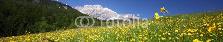 72566816 – Ukraine – meadow