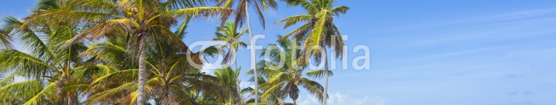 75497371 – Dominican Republic – Palm trees on the tropical beach, Bavaro, Punta Cana, Dominican