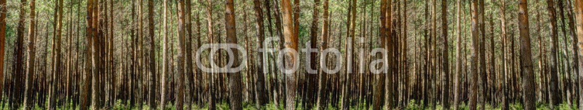 78881870 – South Africa – Forest panorama