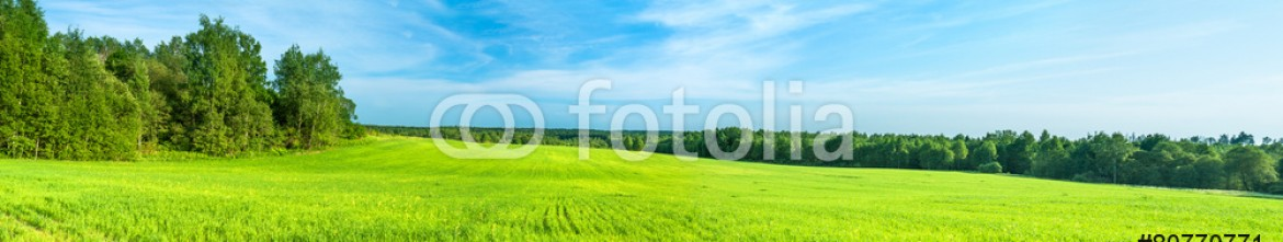 80770771 – Russian Federation – summer rural landscape a panorama with a field and the blue sky
