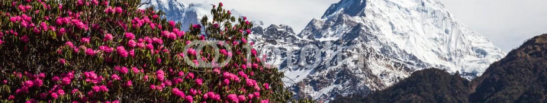81831749 – Nepal – Panorama of the Himalayas in Nepal spring