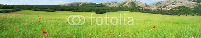 82618294 – Ukraine – Green meadow