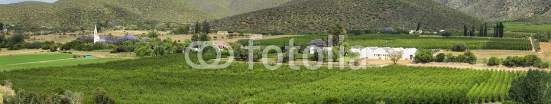 82695088 – Spain – Plantation fields landscape