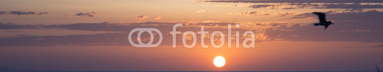 83714241 – Italy – tramonto con gabbiano