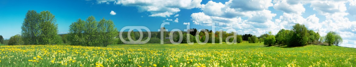 83937337 – Estonia – Field with dandelions and blue sky
