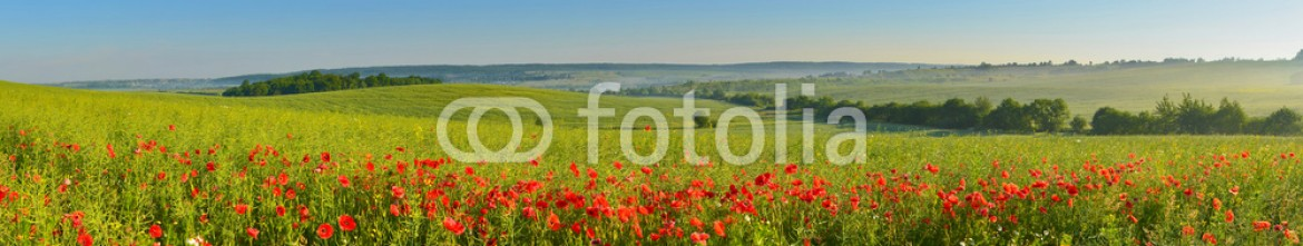 84813598 – Ukraine – Panorama of summer countryside with poppies