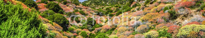 85236105 – Italy – Vegetazione in Sardegna