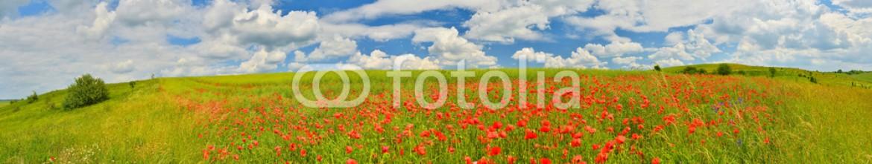 85574510 – Ukraine – Poppy field panorama