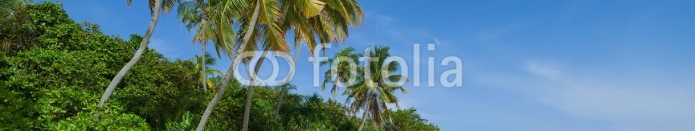 86728619 – Maldives – Tropical beach with coconut palms, Maldives Island, Indian Ocean