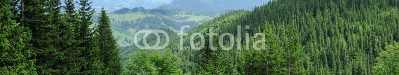 87116598 – Ukraine – Panorama of Beautiful Mountain forest