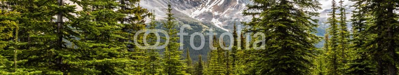 87353126 – Canada – Peyton Lake trails