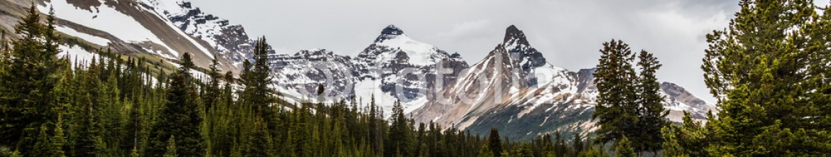 87353792 – Canada – Alpine and Forest near Icefield Parkway