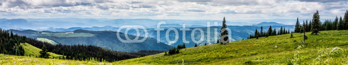 87698074 – Canada – Hiking through the Wild Flowers in the High Alpine of Tod Mountain in the Sushwap Highlands and part of the Sun Peaks ski resort in central British Columbia