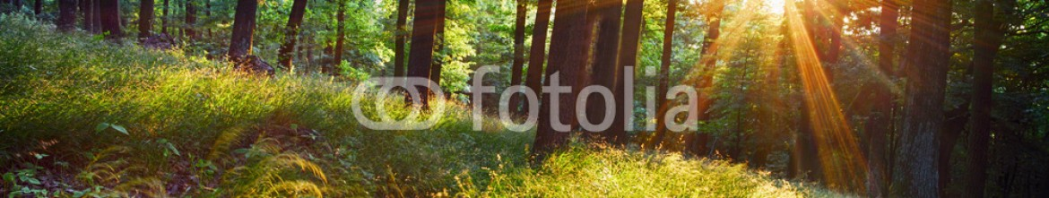 87809476 – Slovakia – The bright sun rays shining through branches of trees, wood land