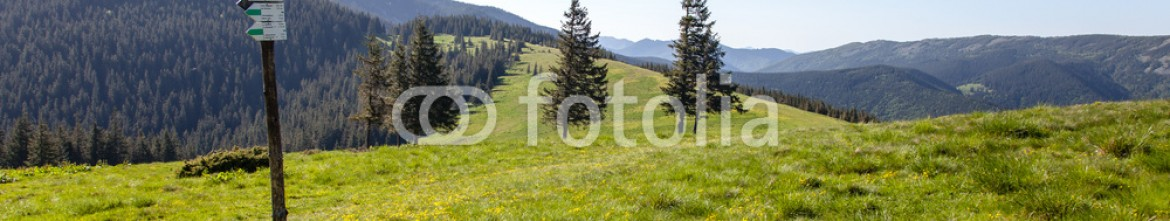 88019147 – Ukraine – Pine Trees and Tourist Sign in the Montains