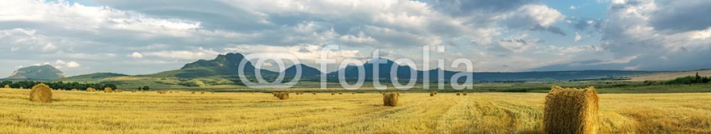 89417635 – Russian Federation – Сено на поле