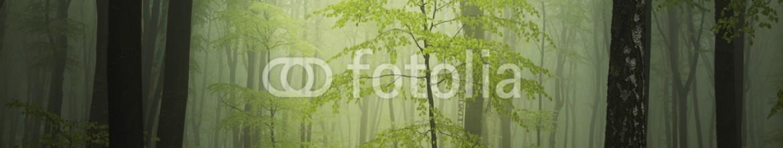 89963938 – Romania – Fantasy forest in fog
