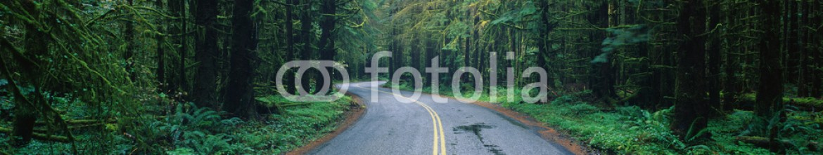 90023462 – United States of America – This is located in the Hoh Rain Forest. It shows a rain soaked road in bad weather surrounded by green trees, ferns and foliage of the surrounding rain forest.