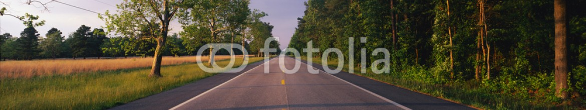 90023505 – United States of America – This is a tree lined road at sunset. It is located on the Eastern Shore of Maryland. The road travels through the center of the trees.