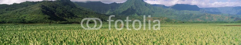 90067218 – United States of America – Hanalei Valley, Hawaii
