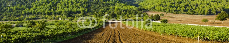 91589377 – Italy – Italian wine Puglia Murgia countryside