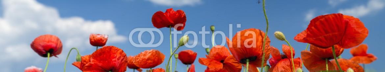91625582 – Ukraine – red poppies under sky