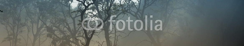 91702442 – Serbia – Trees in fog