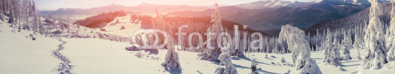 91819962 – Ukraine – Colorful winter sunrise in the Carpathian mountains.