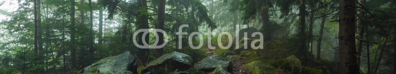 92868744 – Ukraine – fog in forest