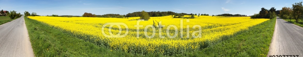 92977737 – Czech Republic – Panoramic view of rapeseed field and road