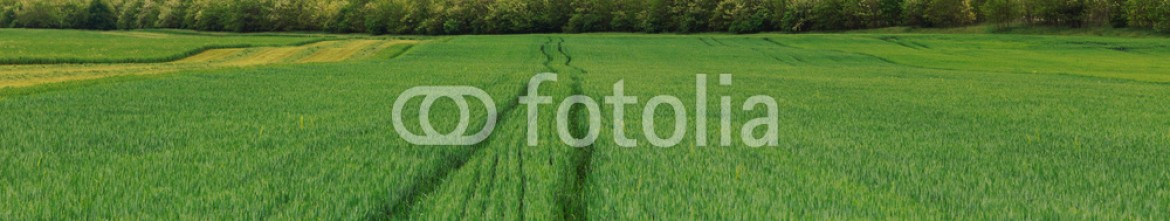 93258132 – Hungary – Wheat field landscape with path