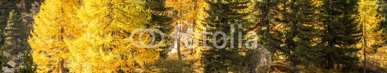93376377 – Italy – laghetto alpino con larici in autunno
