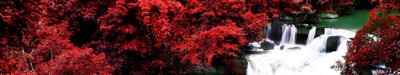 Кухонная панель Красные деревья