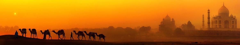 Скинали Выгул верблюдов