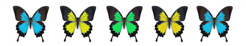 Фартук из стекла Разноцветные бабочки