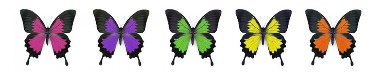 Стеклянный фартук для кухни Яркие бабочки
