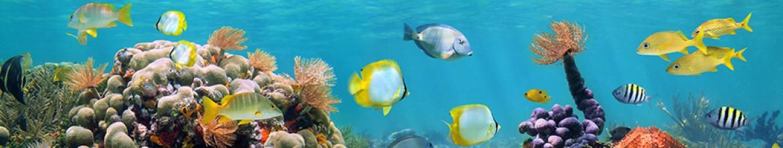 Фартук для кухни Рыбы в океане