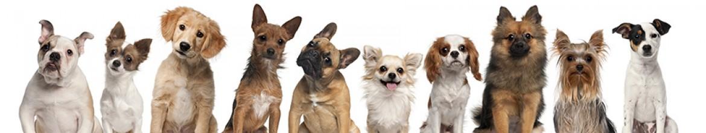 Стеклянный фартук Различные породы собак