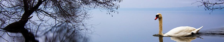 Фартук из стекла Одинокий лебедь