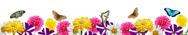 Кухонные панели Бабочки, ромашки и хризантемы