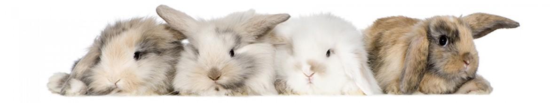 Скинали из стекла Пушистые кролики