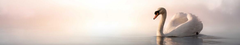 Панели для кухни Белый лебедь в тумане