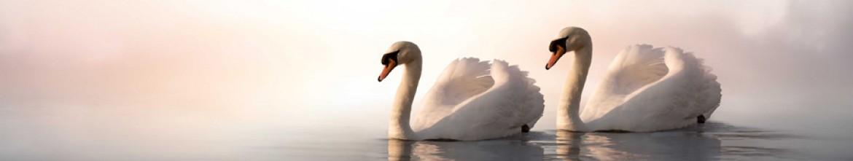 Скинали для кухни Пара лебедей